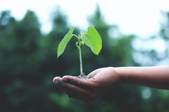 Sapling in person's hand (Photo by Akil Mazumder from Pexels)